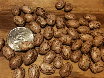 Pinto Bean (Soup, Baking, Dry) (Bush) 28 g