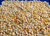 Dynamite (South American Yellow) Popcorn, bulk size: 4 lbs