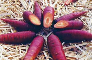 Cosmic Purple Carrot