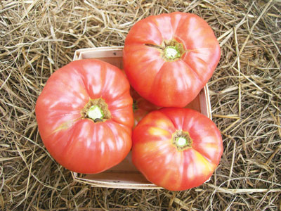 Granny Cantrell's Pink Tomato