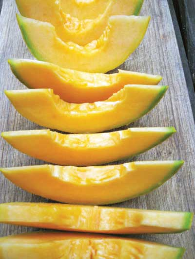 Kansas Muskmelon