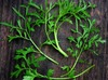 Curly Cress (Garden Cress) 2 g