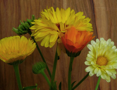 Calendula, Pacific Beauty 0.5 g