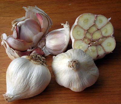 Italian Softneck Garlic 8 oz.