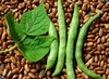 Genuine Cornfield Pole Snap Bean, bulk size: 1 lb