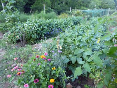 Ann Shrader's Verdant Garden