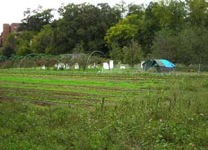 Field, High Tunnel, and Chicken Yard
