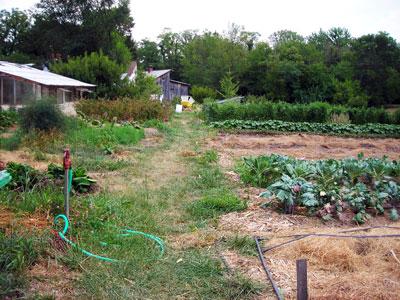 Sandhill's Backyard Garden