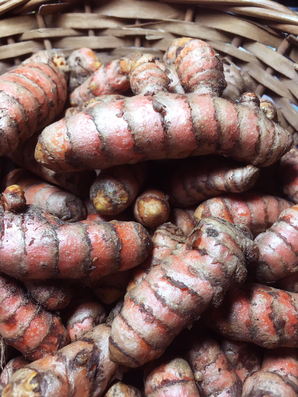 Turmeric Rhizomes, Red Hawaiian, 6 oz.