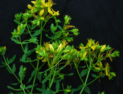 St. Johnswort 0.05 g