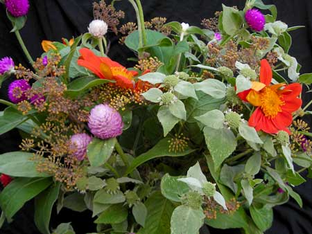 yacon, basils, and amaranths