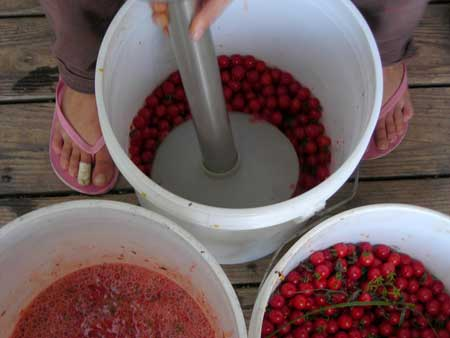 Blending cherry toatoes