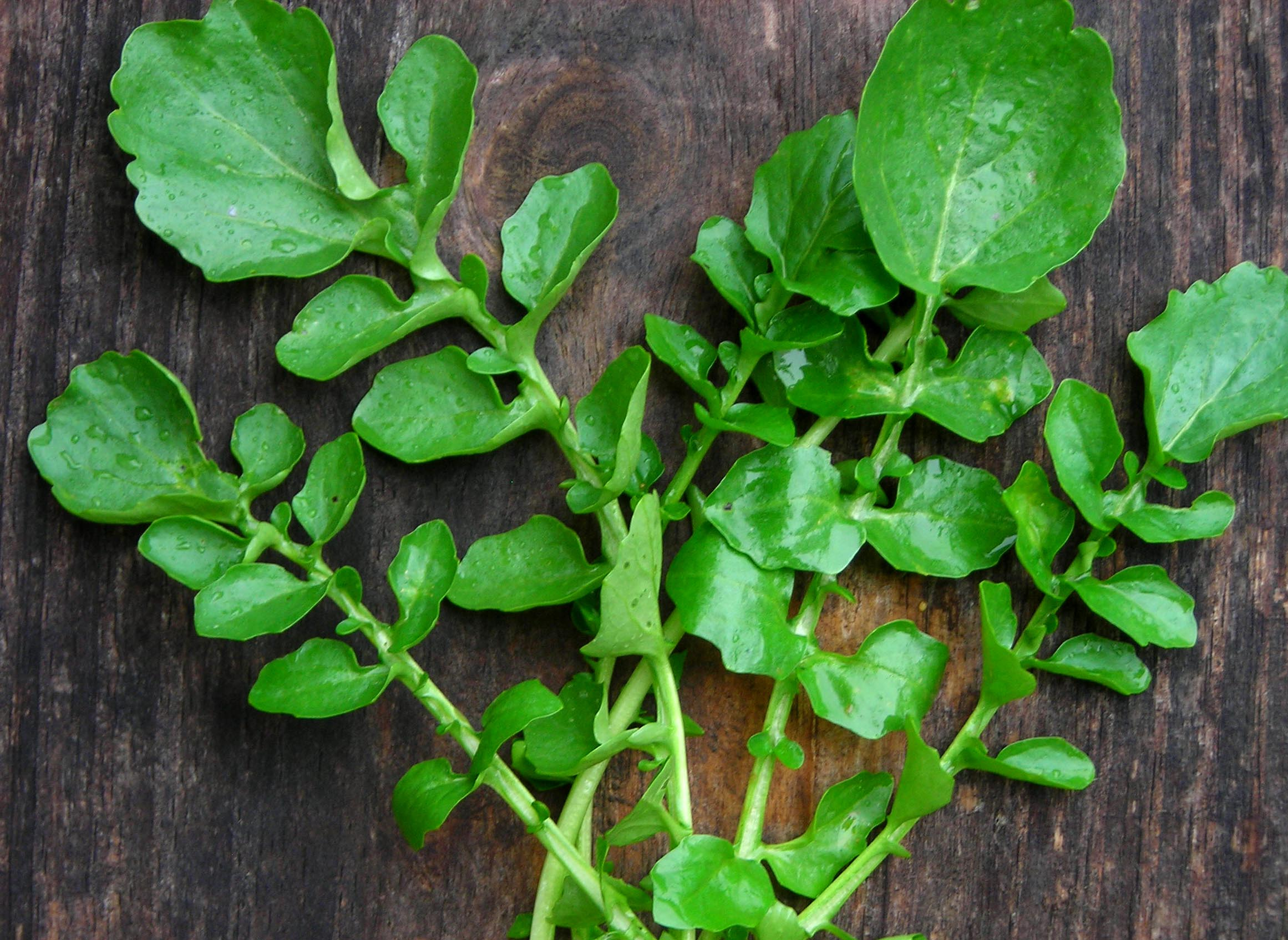 Belle Isle Upland Cress 15 g Southern Exposure Seed Exchange