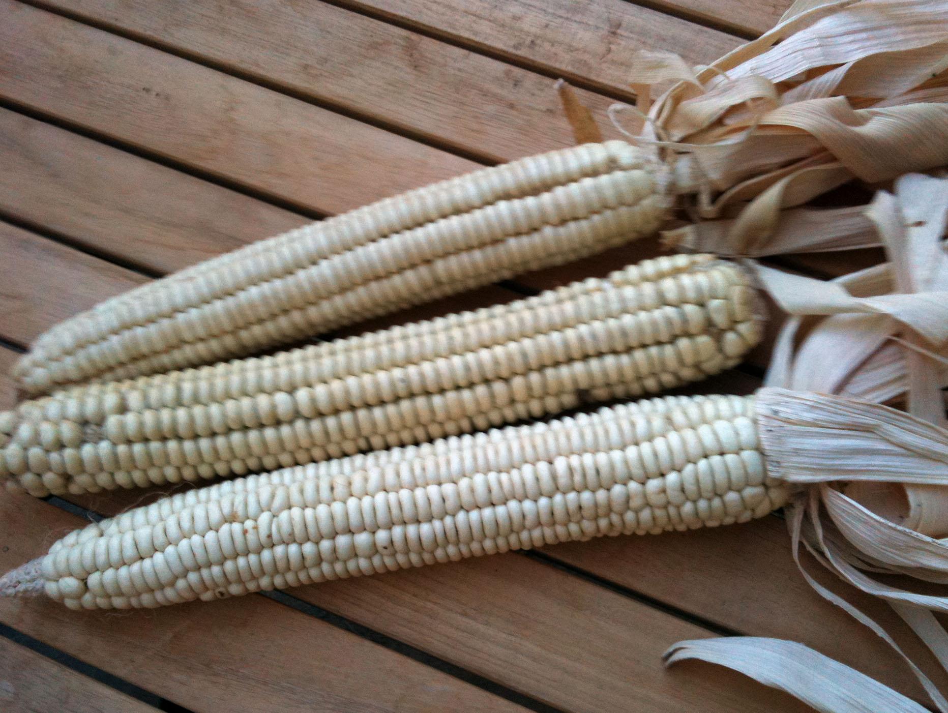 Cherokee White Flour  Original Flour Corn  42 G   Southern
