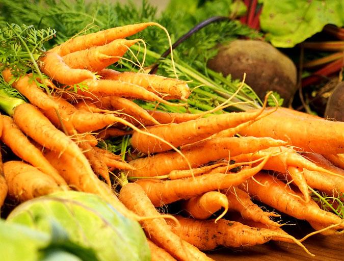Danvers 126 Carrots Bulk Size 28 G Southern Exposure