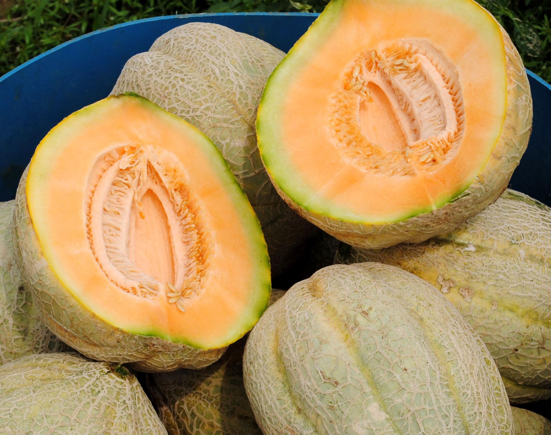 pike muskmelon 2 g southern exposure seed exchange saving the
