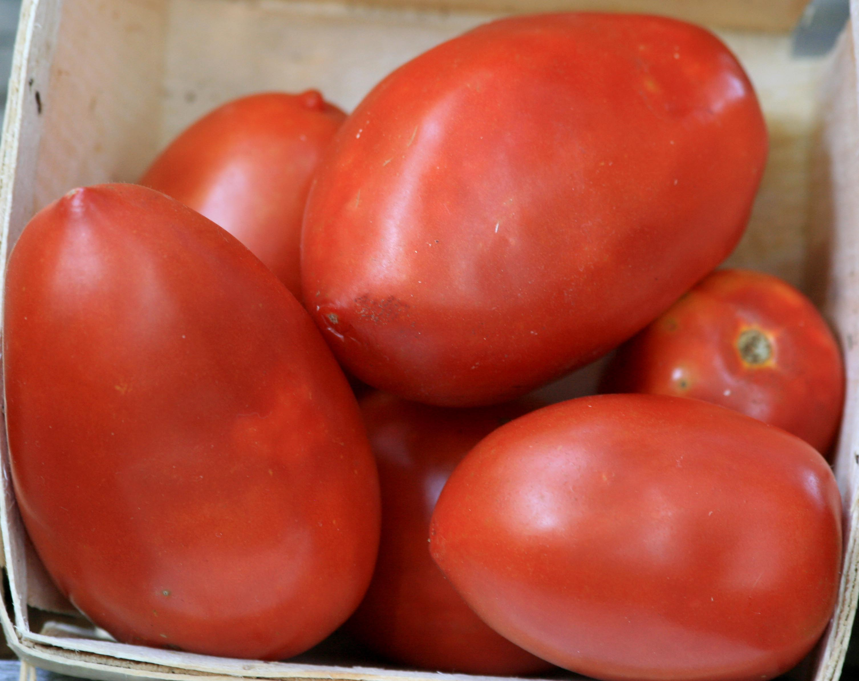 Amish Paste Tomato G Southern Exposure Seed