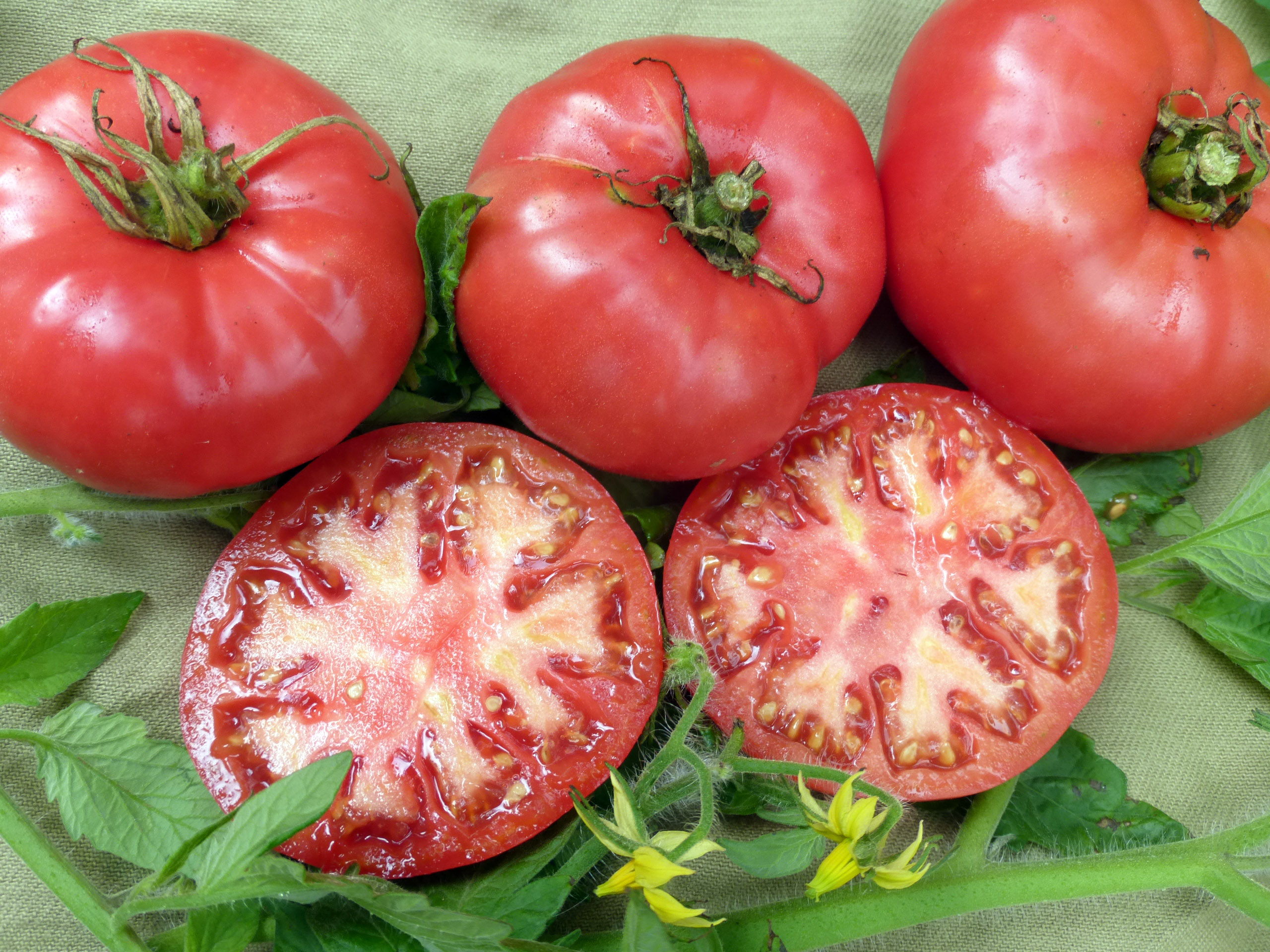 Tomato pink elephant: description of the variety, photo, characteristics, cultivation 20