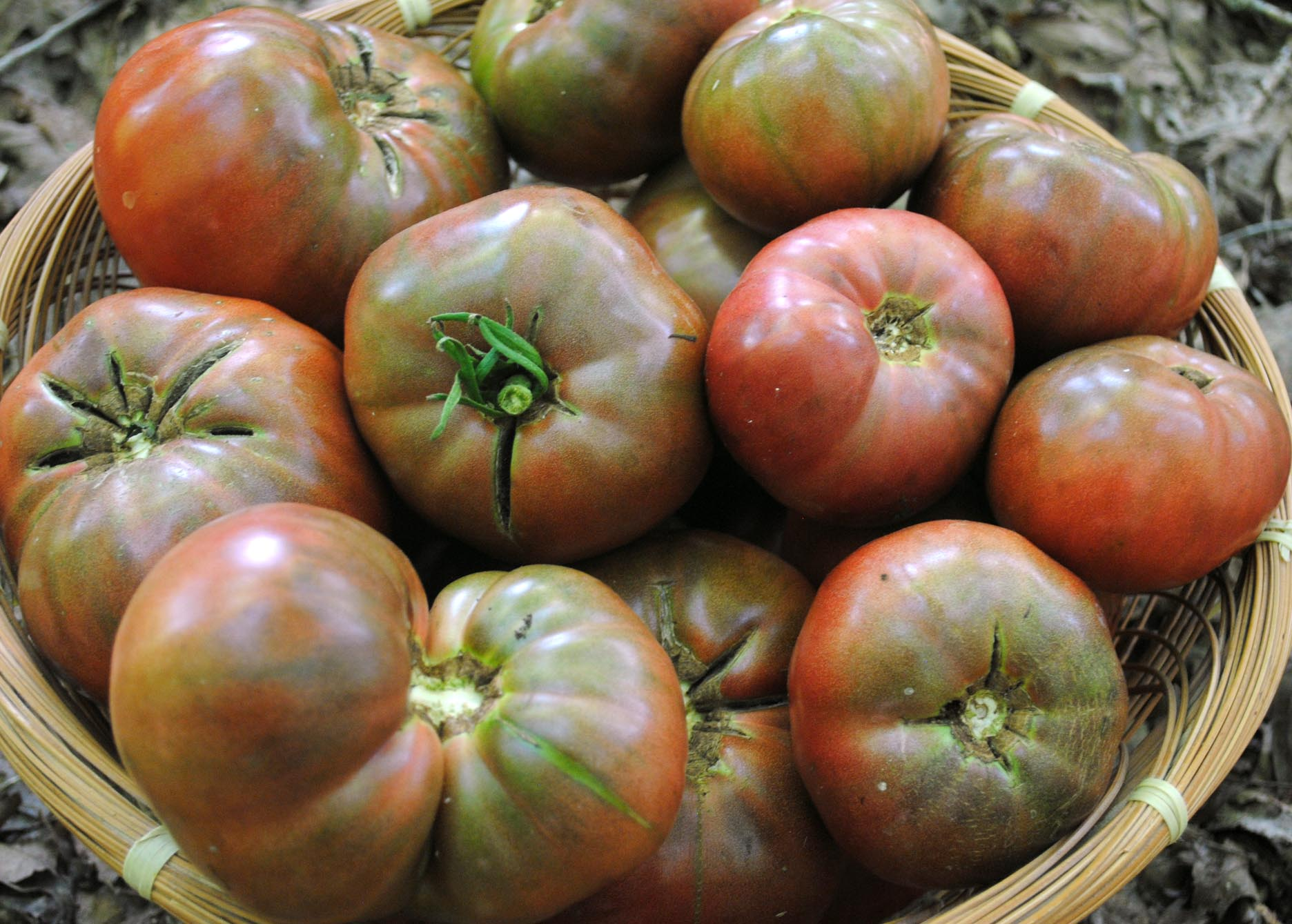 Cherokee Purple Tomato G Southern Exposure Seed