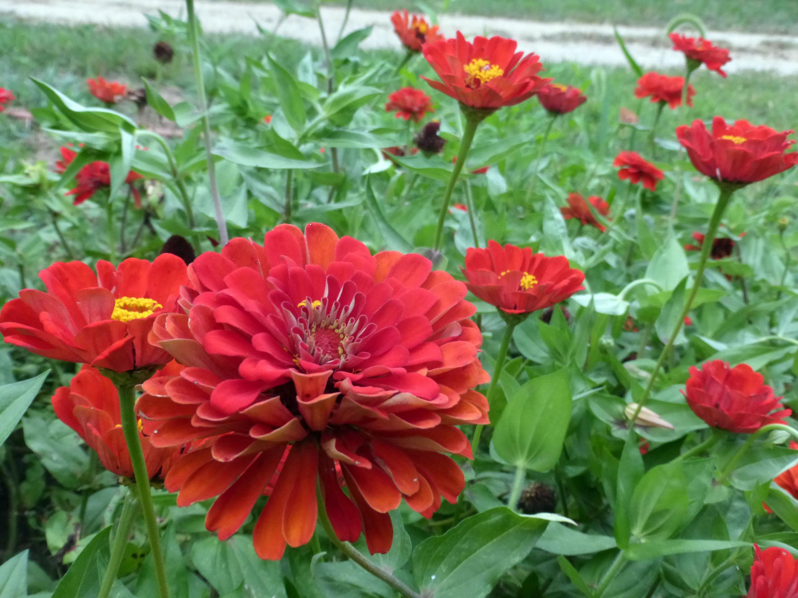 100 Bushy U0027s Dream Cottage Pictures 100 Flower