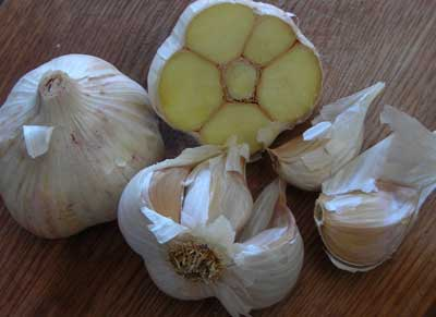 Lorz Italian Softneck Garlic 8 oz.