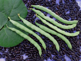 Black-Seeded Kentucky Wonder Pole Snap Bean, 28 g