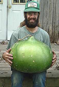 bushel gourd ornamental gourd 3 g southern exposure seed exchange