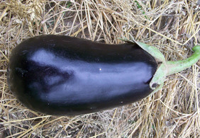 Early Black Egg Eggplant, 0.25 g