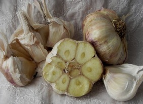 Inchelium Red Softneck Garlic, 8 oz.