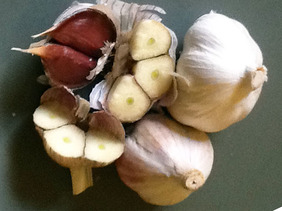 Russian Inferno Asiatic Turban Garlic, 8 oz.