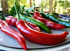 Lombok (Chile Lombak) Hot Pepper, bulk size: 3 g