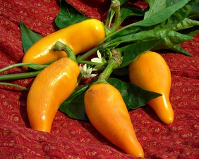 Orozco (Carrot Chile) Hot Pepper, 0.3 g