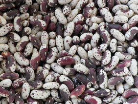 Jacob\'s Cattle (Trout) Bush Dry Bean, bulk size: 1/2 lb