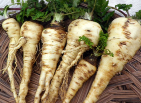 Hollow Crown (Sugar) Parsnip, bulk size: 28 g