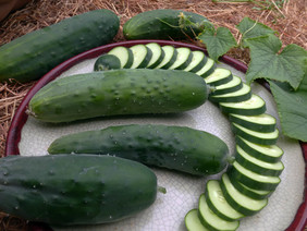 Poinsett 76 Cucumber, 2 g