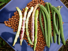 Colossus Southern Pea (Cowpea), 28 g