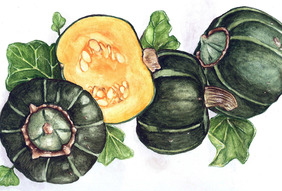 Buttercup, Burgess Winter Squash, 5 g