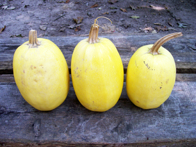Spaghetti Squash (Vegetable Spaghetti) Winter Squash, 4 g