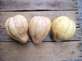 Thelma Sanders Sweet Potato (Acorn) Winter Squash, 2 g