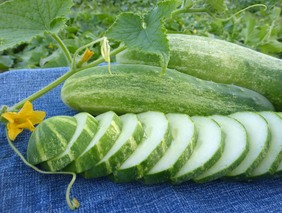 Straight Eight Cucumber, bulk size: 28 g