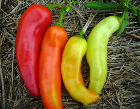 Sweet Banana (Long Sweet Hungarian) Sweet Pepper, 0.3 g