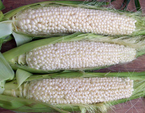 Country Gentleman (Shoepeg) Sweet Corn, 28 g