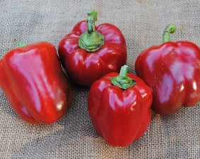 Jupiter Sweet Bell Pepper 0.3 g
