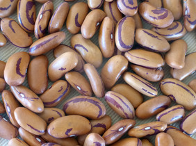 Tiger Eye Bush Dry Bean, bulk size: 1/4 lb