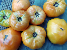 Barnes Mountain Orange Tomato, 0.16 g