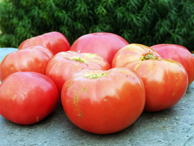 German Johnson Tomato, 0.16 g