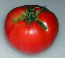 June Pink (Pink Earliana) Tomato, 0.16 g