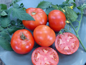 Mountain Princess Tomato, 0.16 g