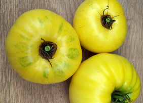 Yellow Mortgage Lifter Tomato, 0.16 g