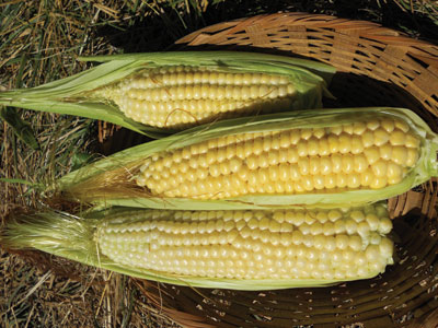 Ashworth Sweet Corn 1/4 lb